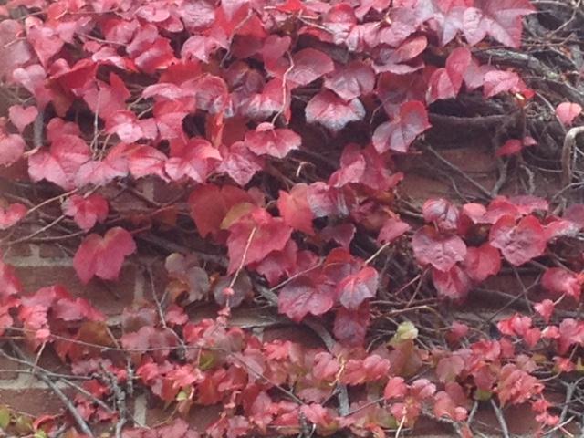 Autumn colours Duryard 2