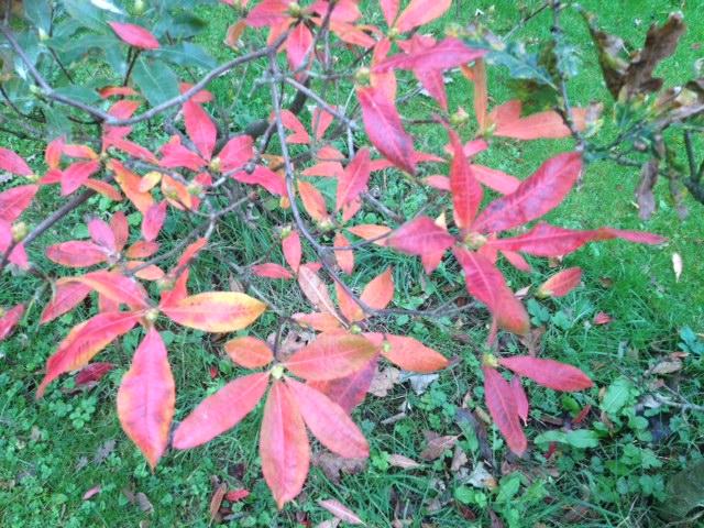 Autumn colours Duryard
