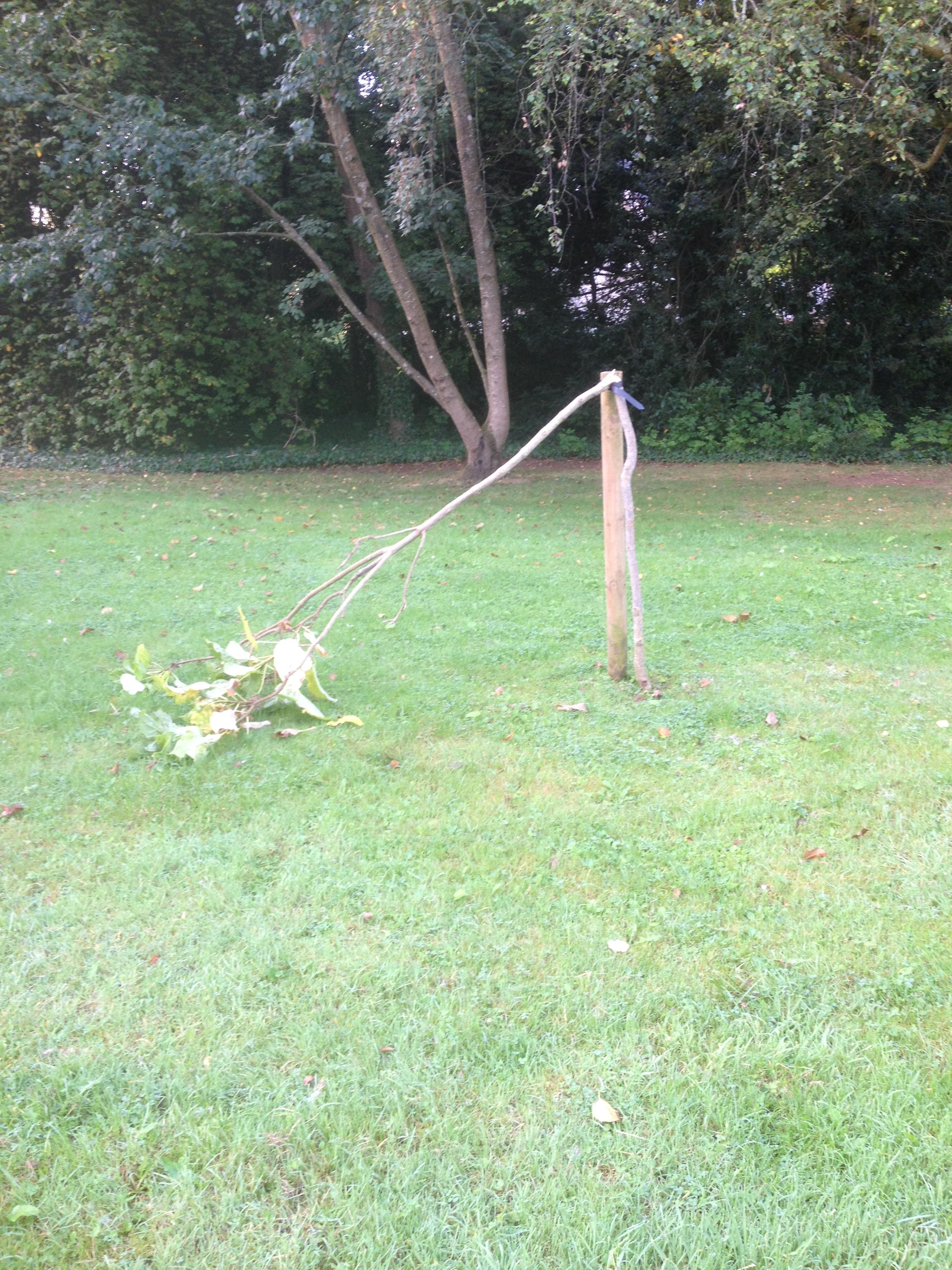 Vansalised tree at Pennsilvania Court
