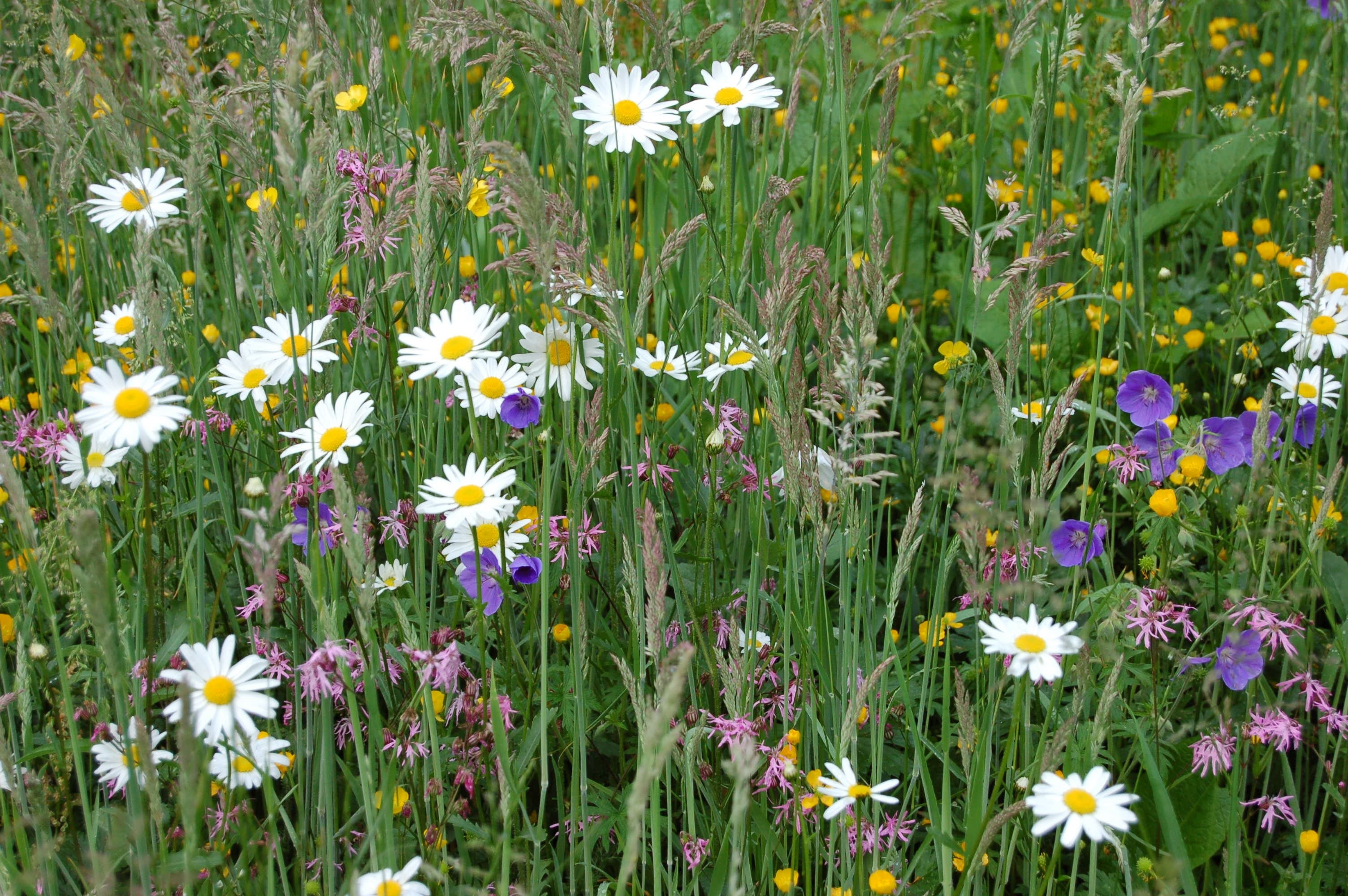 How To Display Art Prints Wildflower Meadow Budding News