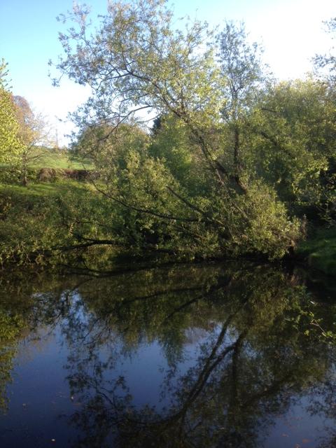 Wind blown willow - Hoopern - Apr 15