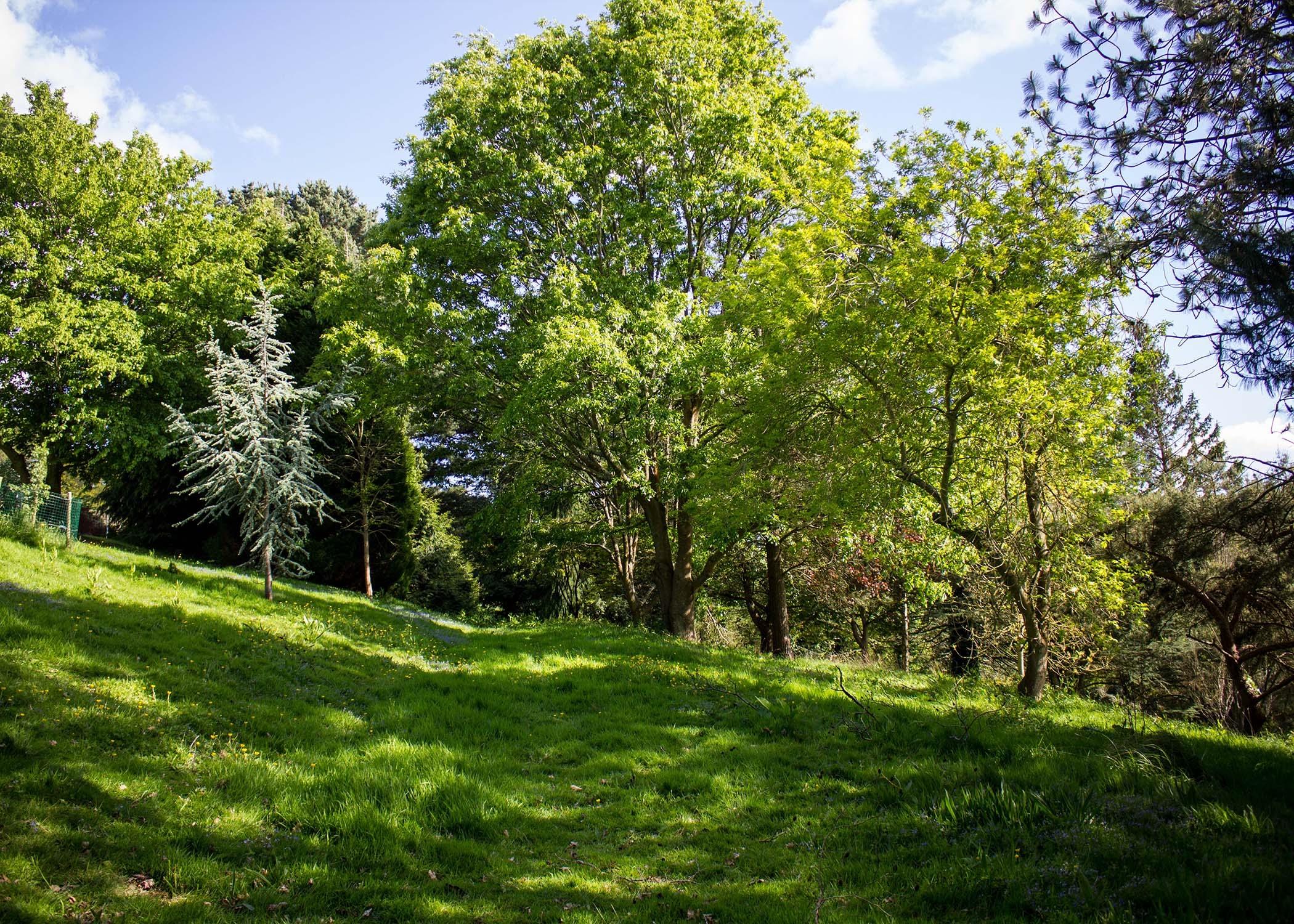 Birks Bank Arboretum