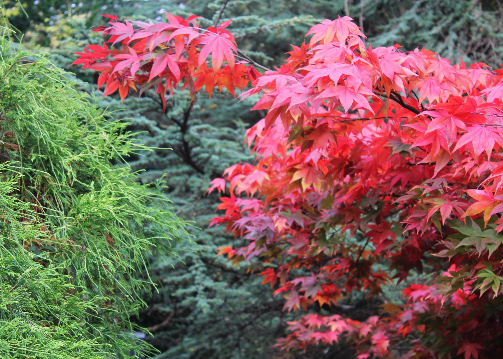 Foliage in the Plantation