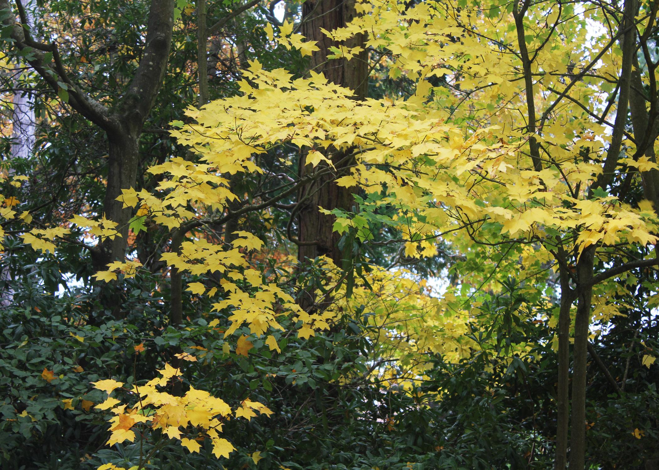 Foliage near Reed