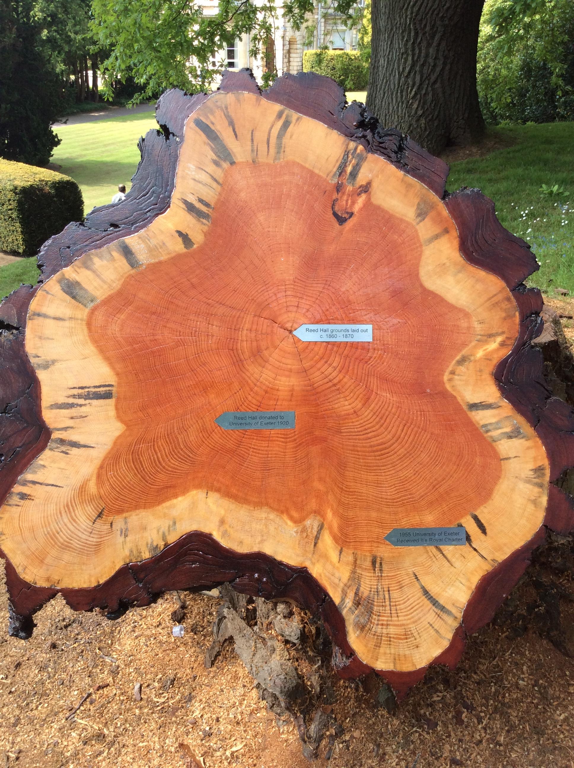 Tree timeline Jun 16
