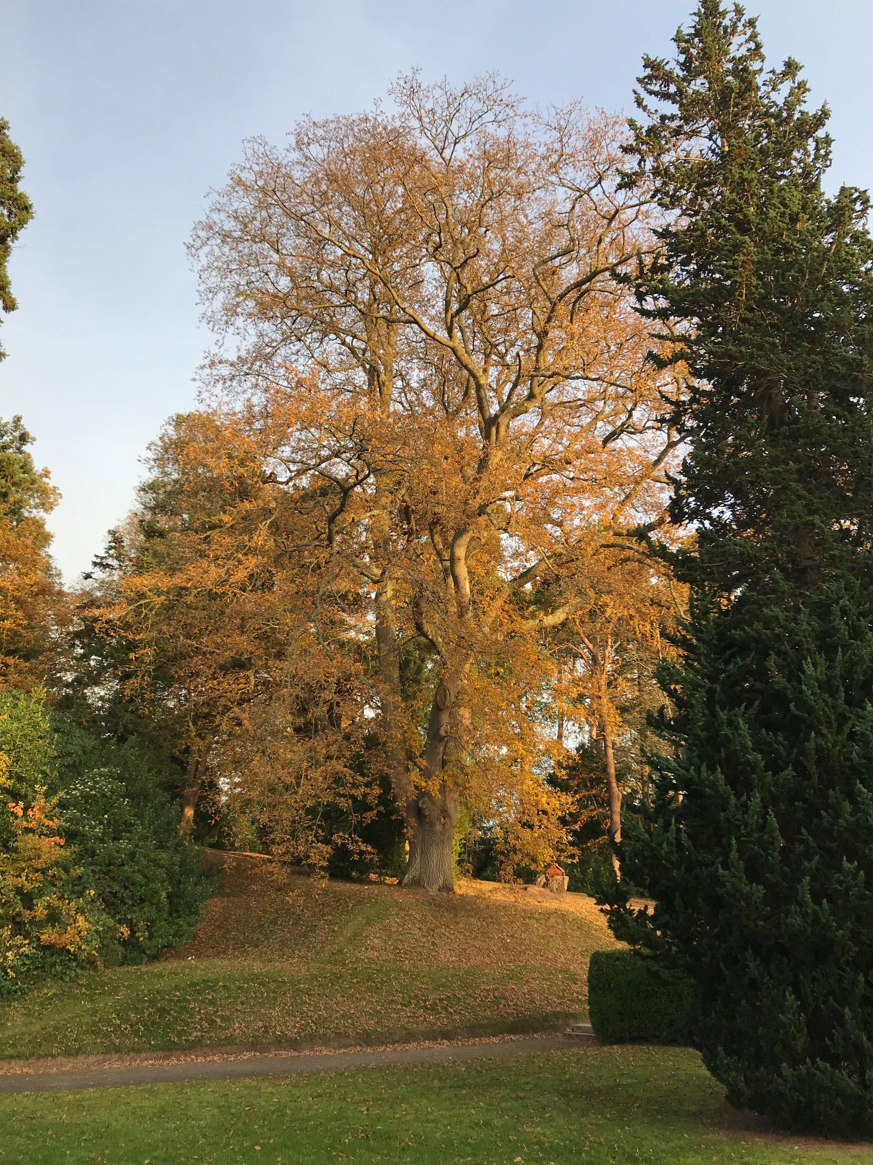 Reed Hall gardens | Budding News
