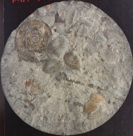 Shell Island Geology explanations
