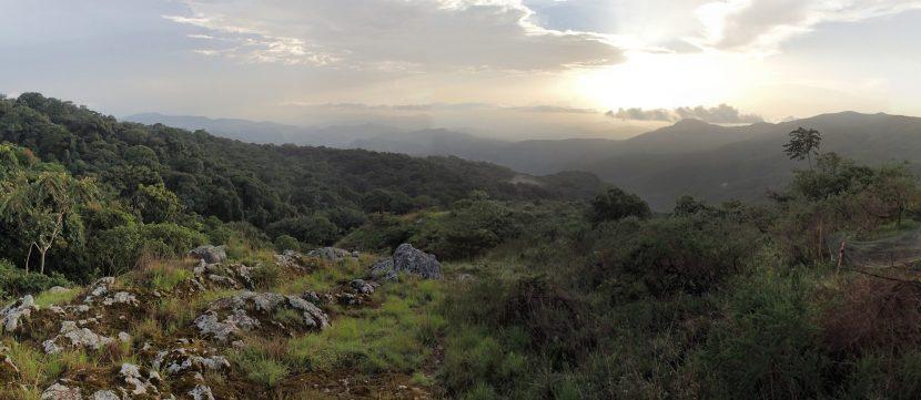 The field site in Nigeria, Ngel Nyaki.