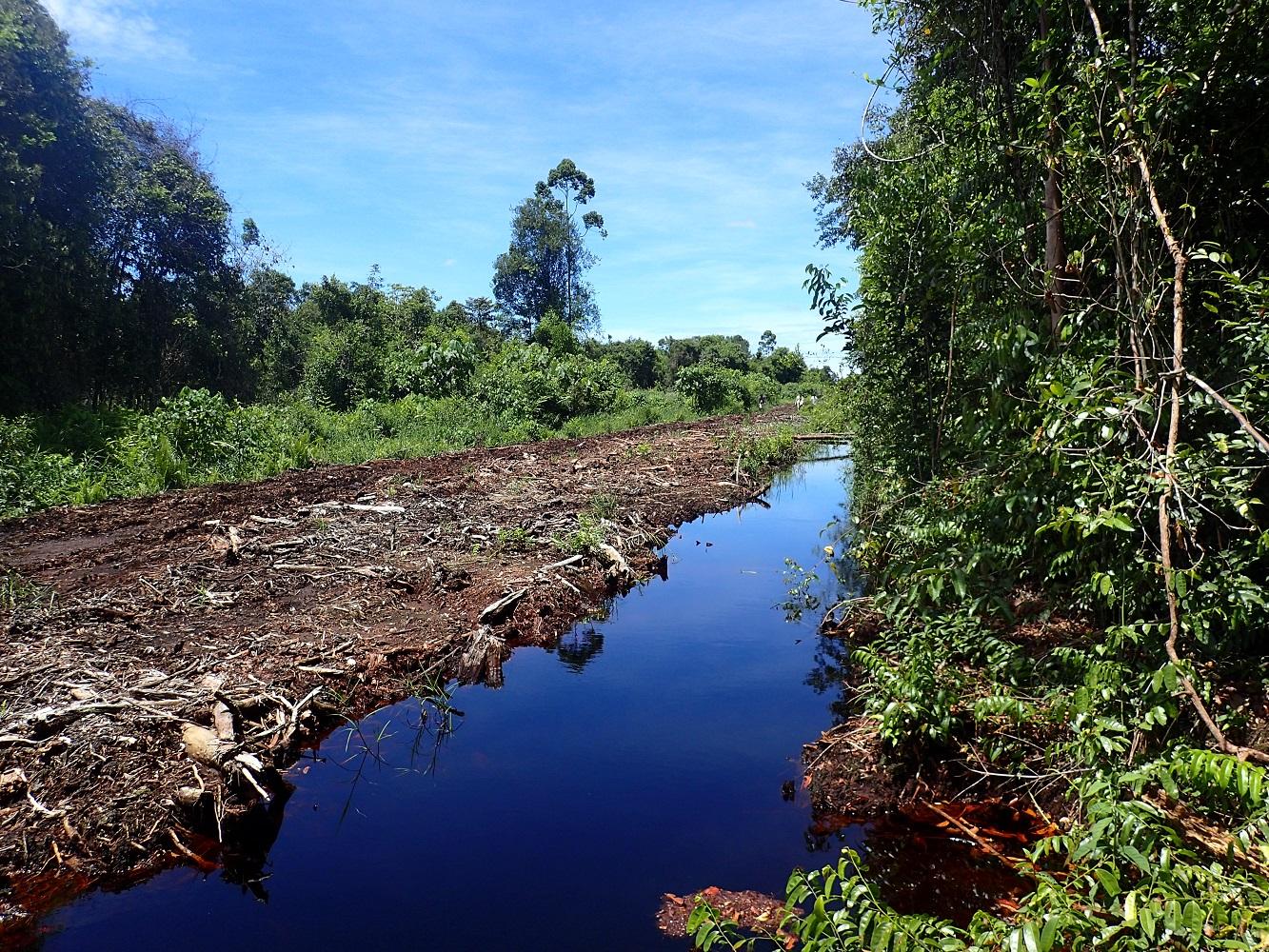 Oil Palm Plantation Road and Draingage in Sarawark Malaysia