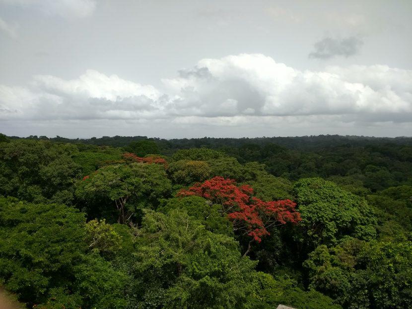 Ankasa, Ghana (Photo by Lucy Rowland)