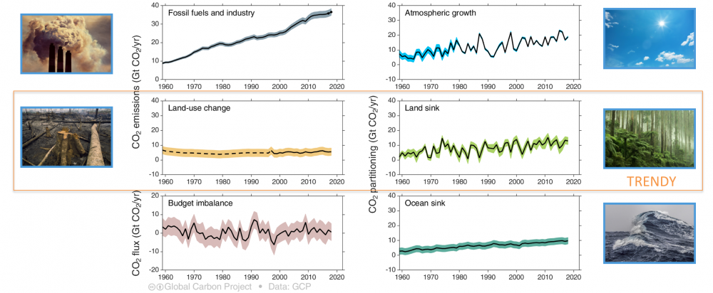 TRENDY: Trends in the land carbon cycle